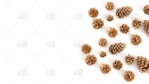 gold pinecones on a white background